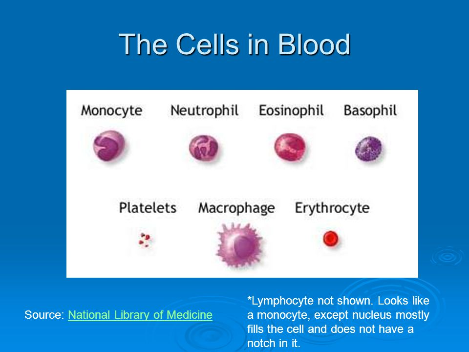 The Cells in Blood Source: National Library of MedicineNational Library of Medicine *Lymphocyte not shown. Looks like a monocyte, except nucleus mostl