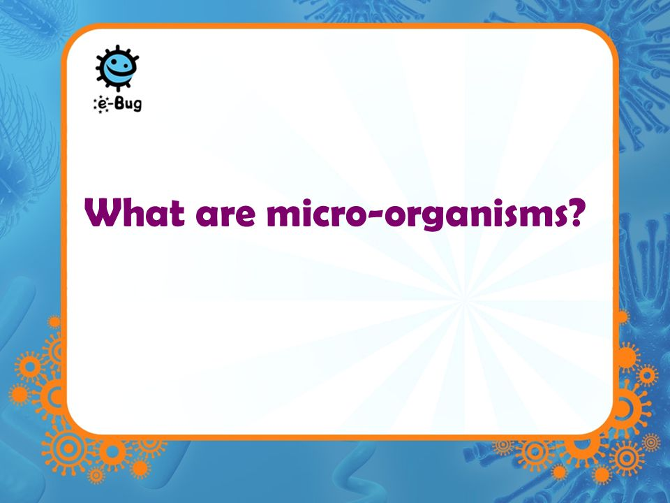 Microbes –Microbes are single celled organisms –Too small to be seen with the naked eye –They are found practically EVERYWHERE on earth –Also commonly known as bugs, germs and microbes –Generally divided into 3 different groups Bacteria Virus Fungi