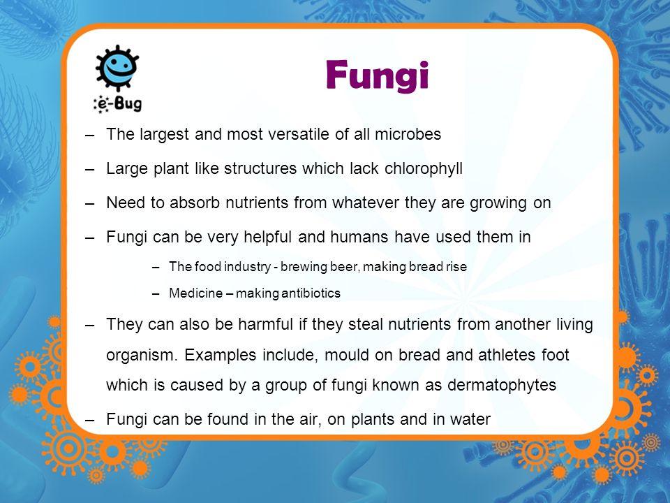 Fungal Structure Sporangia: Spore producing body.