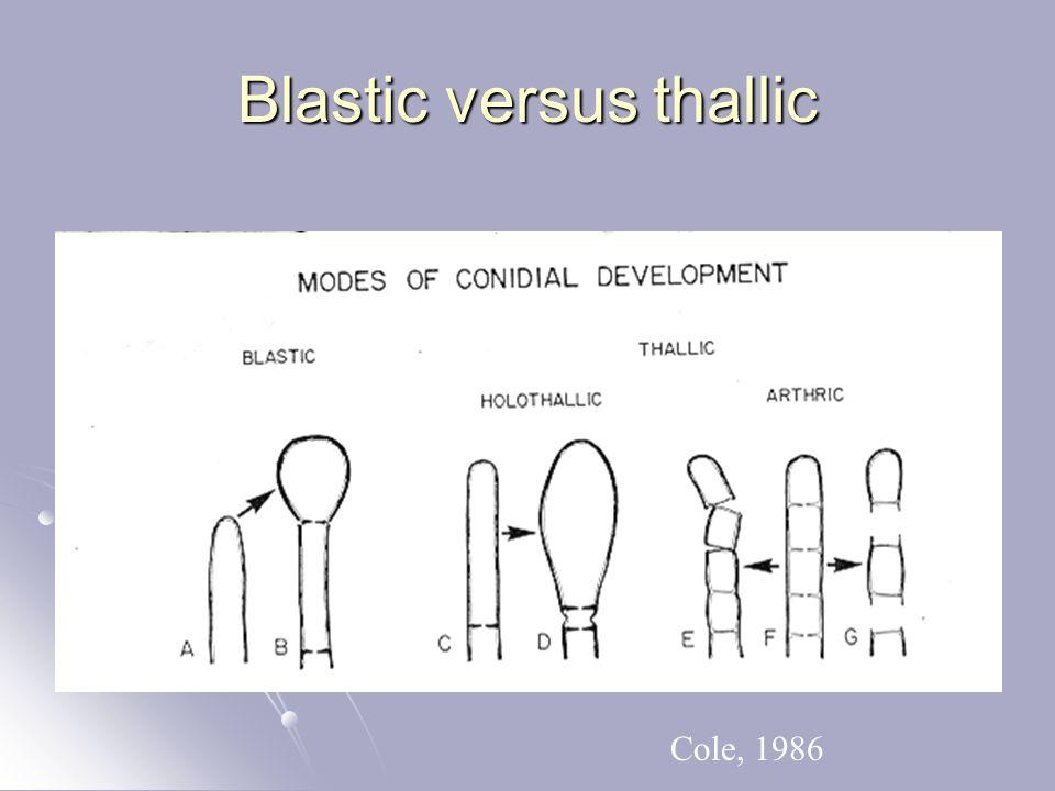 Blastic versus thallic Cole, 1986