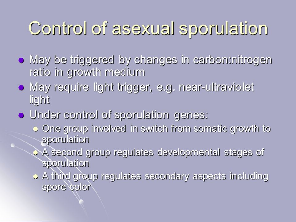 Control of asexual sporulation May be triggered by changes in carbon:nitrogen ratio in growth medium May be triggered by changes in carbon:nitrogen ra