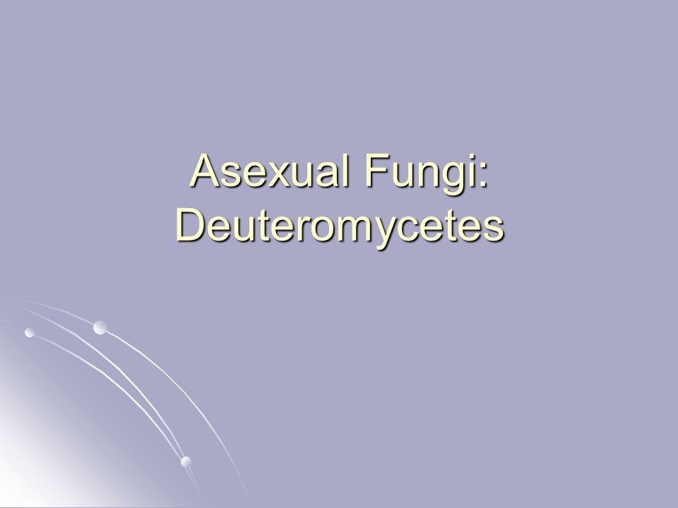 Asexual Fungi: Deuteromycetes