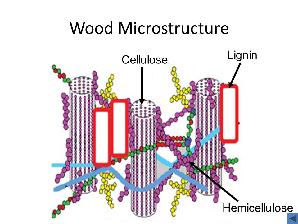 Wood Microstructure Cellulose Lignin Hemicellulose