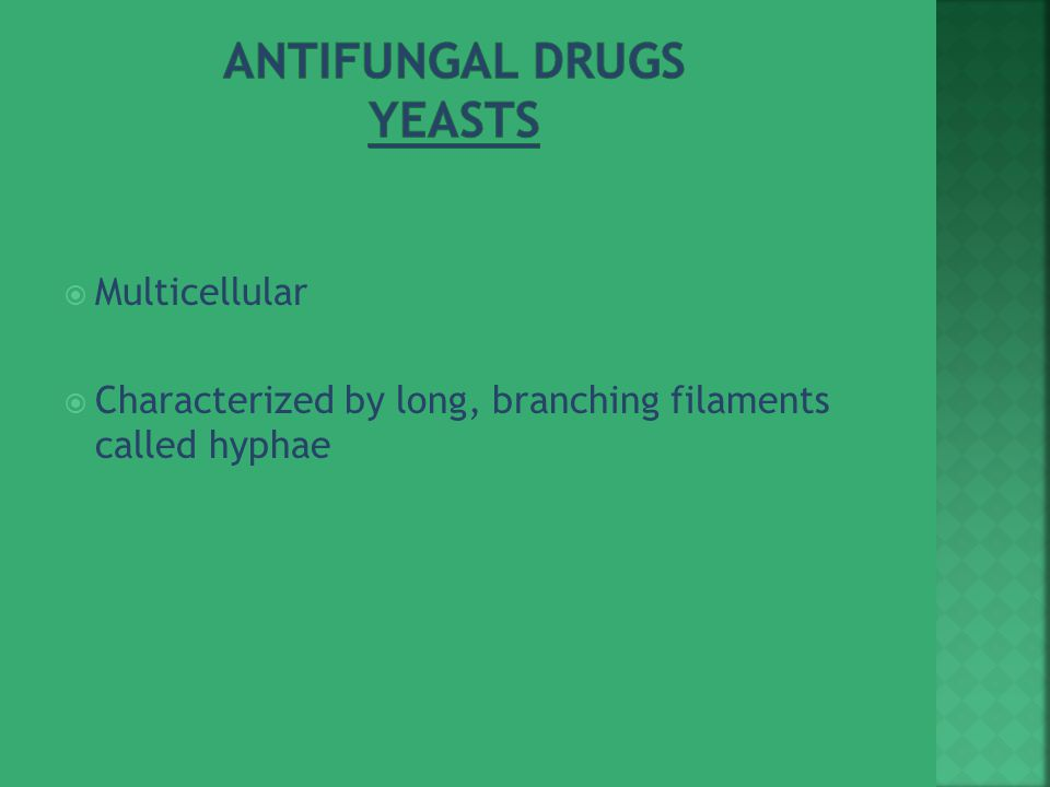  Multicellular  Characterized by long, branching filaments called hyphae