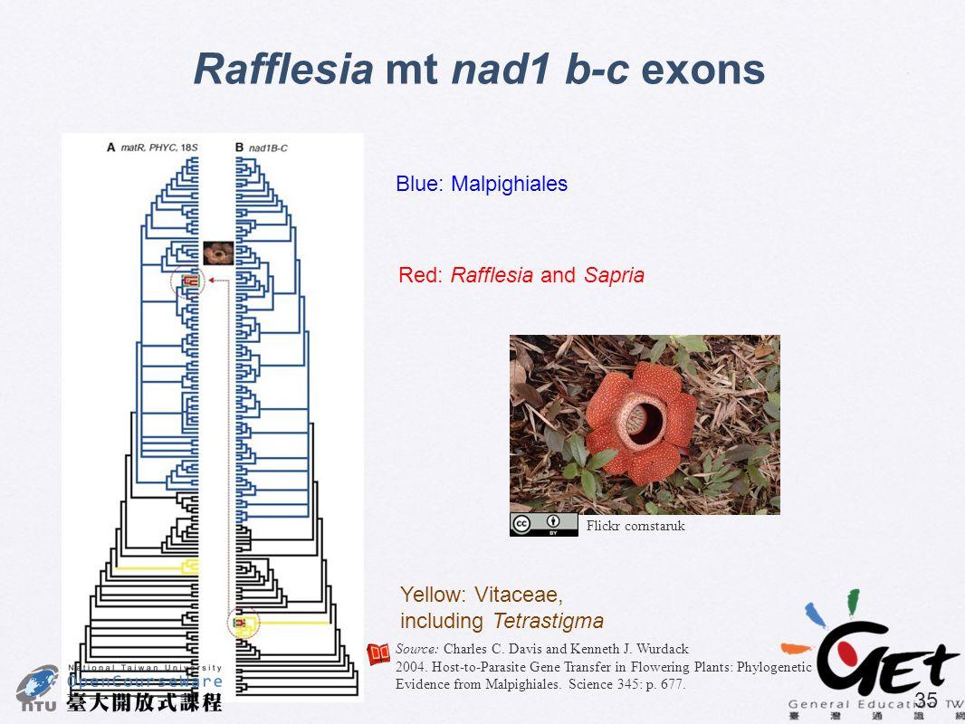 35 Rafflesia mt nad1 b-c exons Blue: Malpighiales Red: Rafflesia and Sapria Yellow: Vitaceae, including Tetrastigma Source: Charles C. Davis and Kenne
