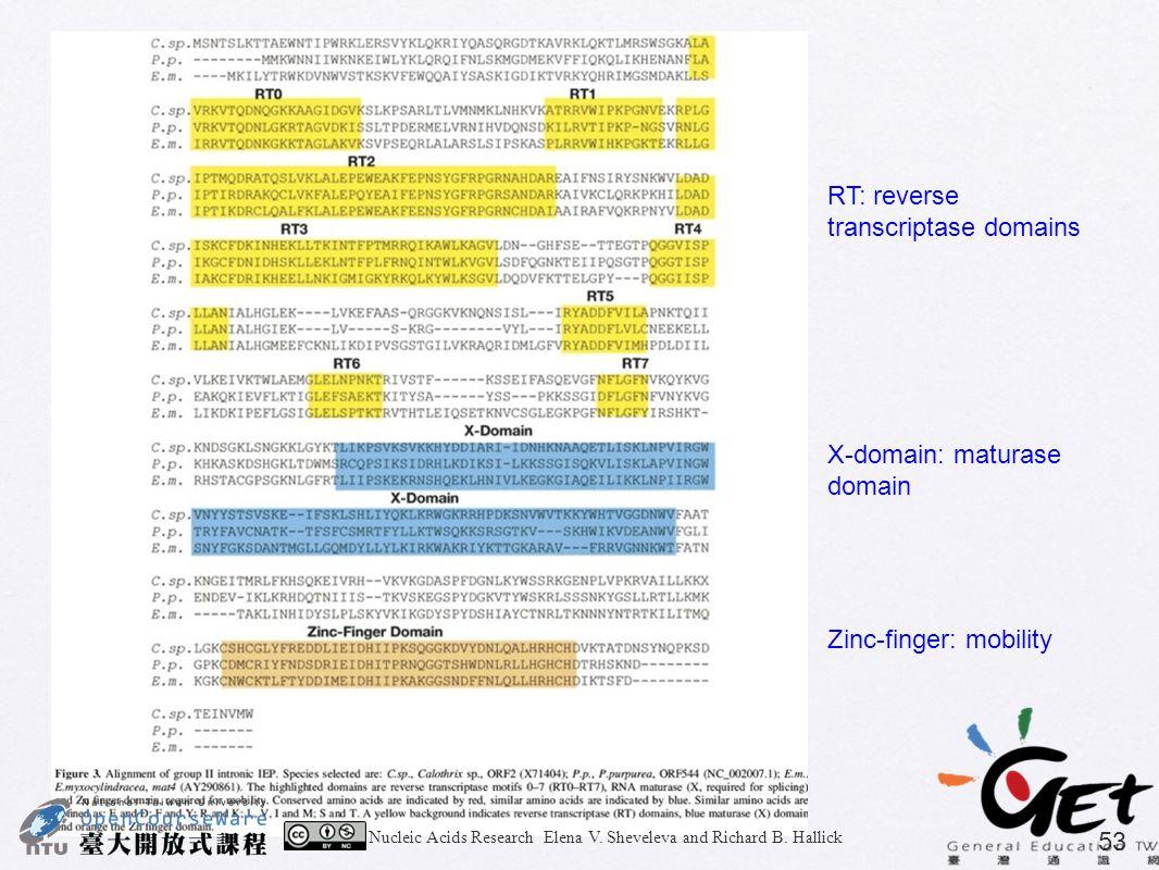 Nucleic Acids Research Elena V. Sheveleva and Richard B. Hallick 53 RT: reverse transcriptase domains X-domain: maturase domain Zinc-finger: mobility