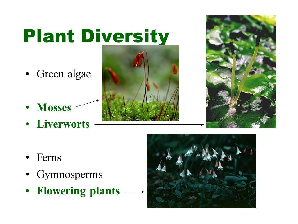 Plant Diversity Green algae Mosses Liverworts Ferns Gymnosperms Flowering plants