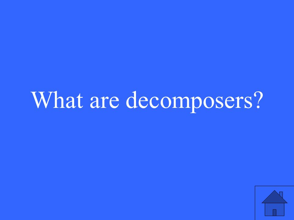 17 What are decomposers
