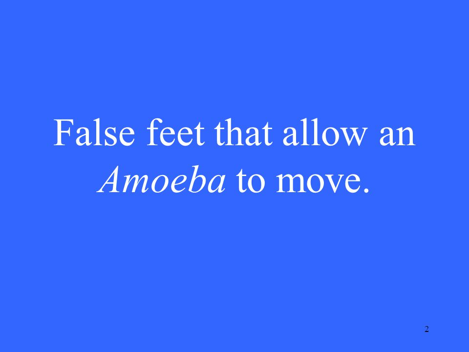 2 False feet that allow an Amoeba to move.