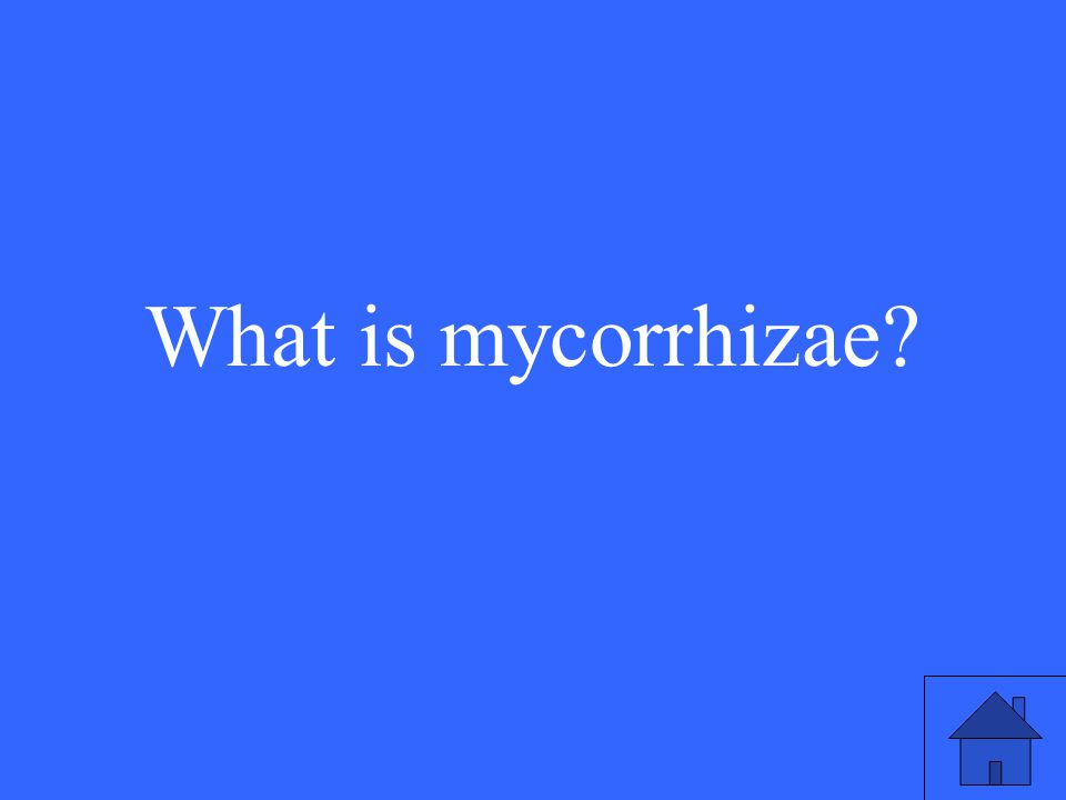 21 What is mycorrhizae