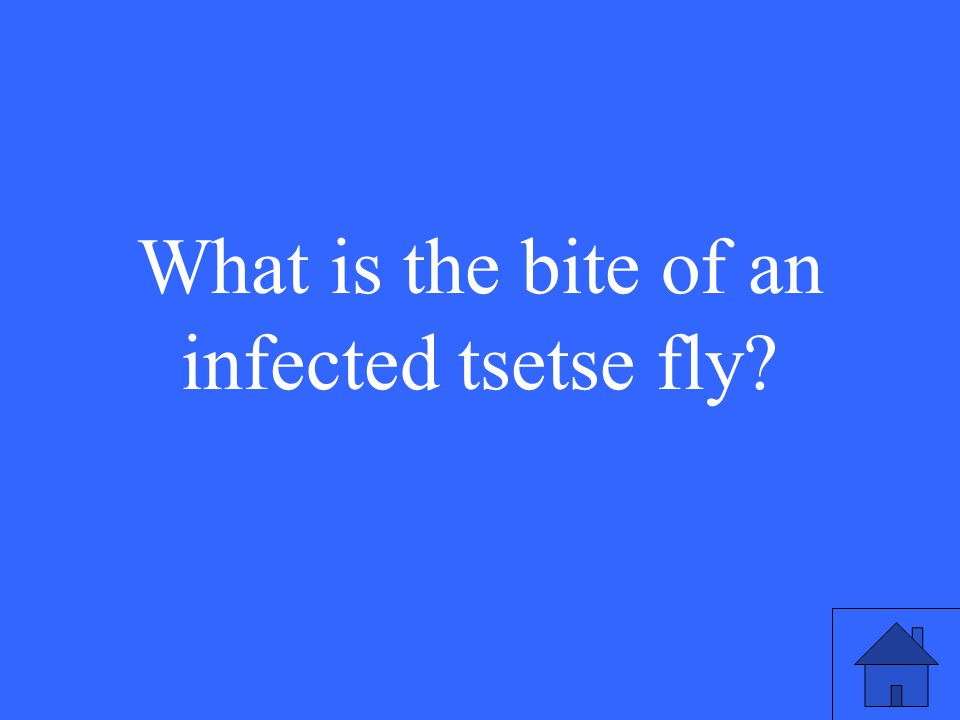 31 What is the bite of an infected tsetse fly