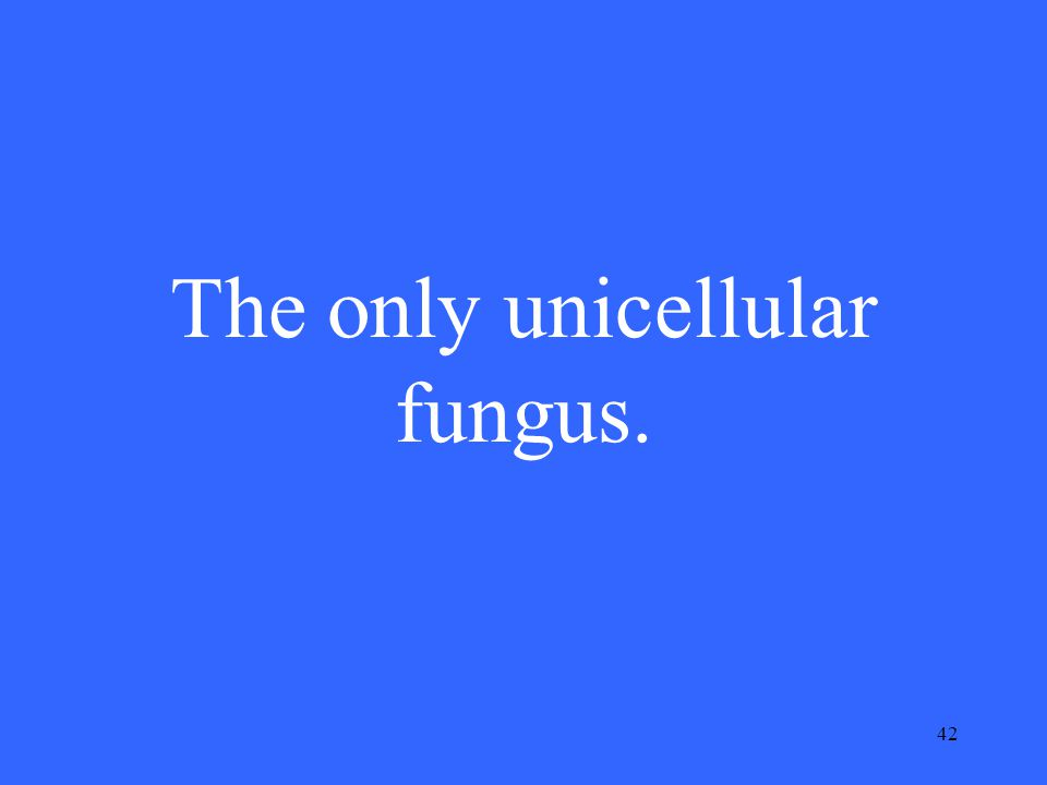 42 The only unicellular fungus.