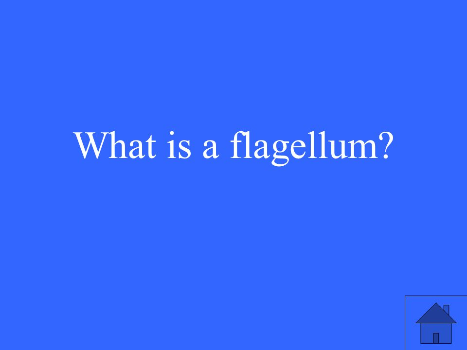 7 What is a flagellum