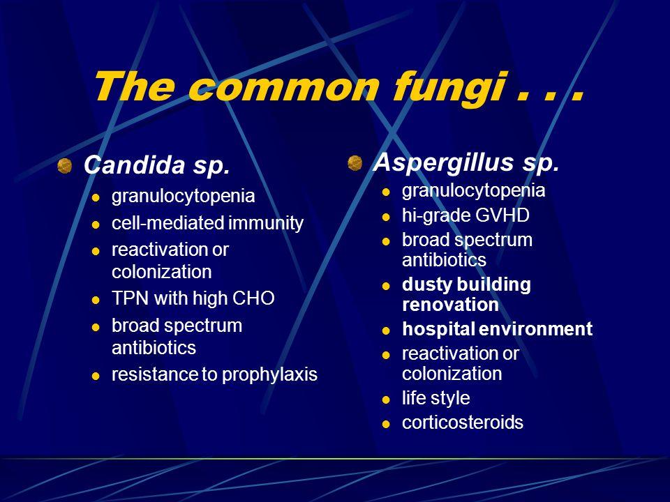 The common fungi... Candida sp.