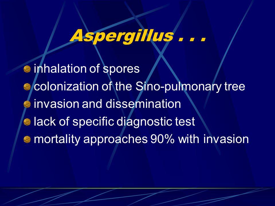 Aspergillus...