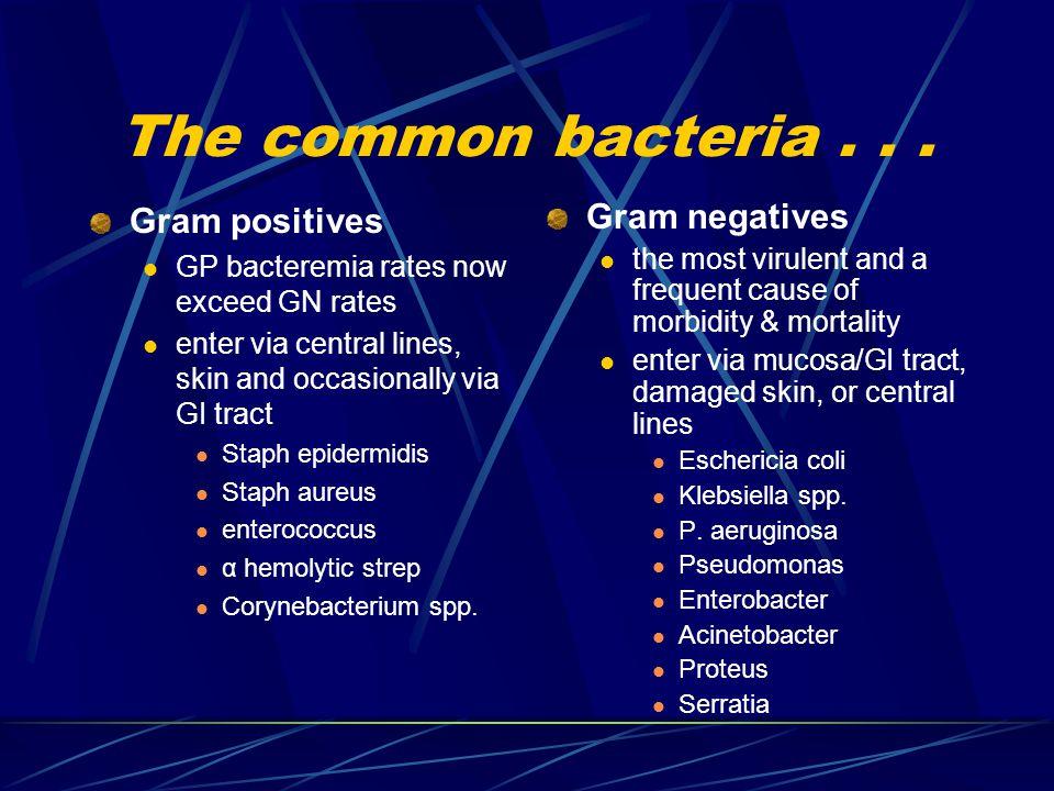 The common bacteria...