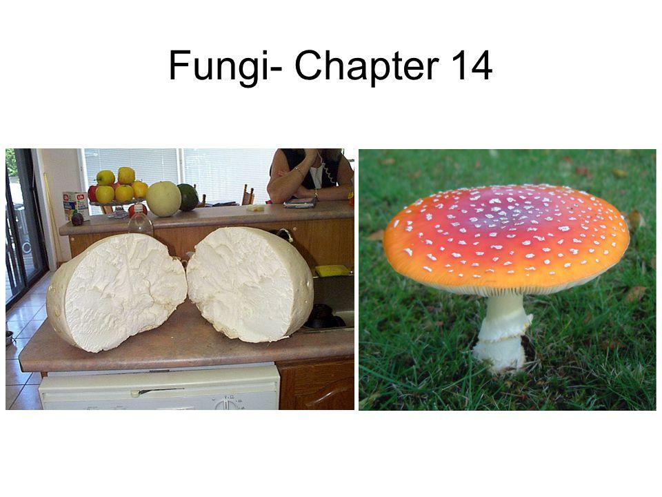 Fungi- Chapter 14