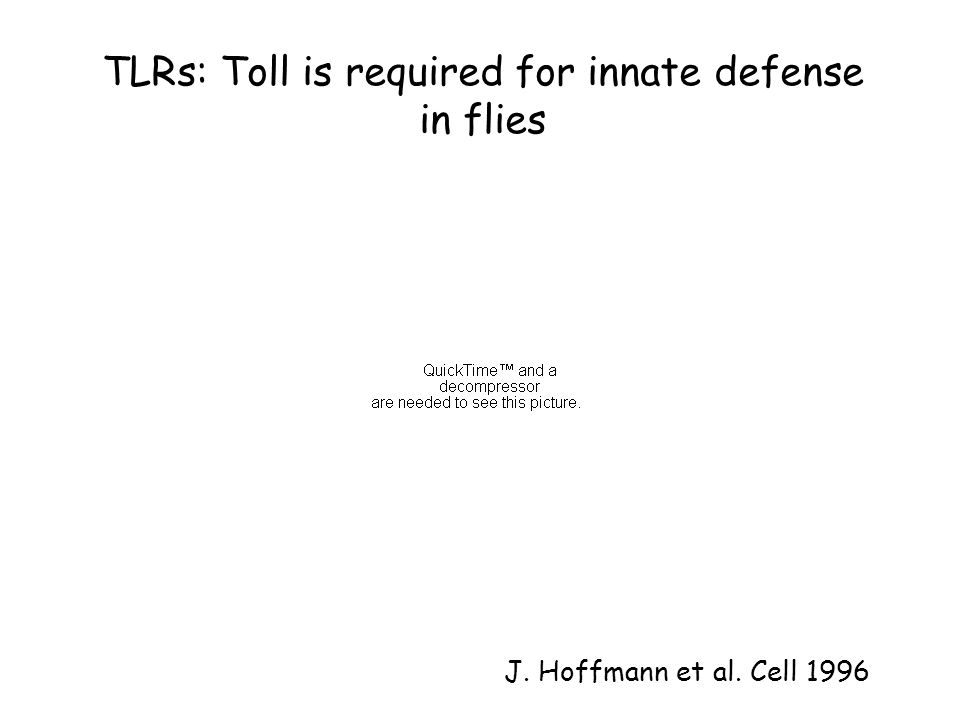 TLRs: Toll is required for innate defense in flies J. Hoffmann et al. Cell 1996