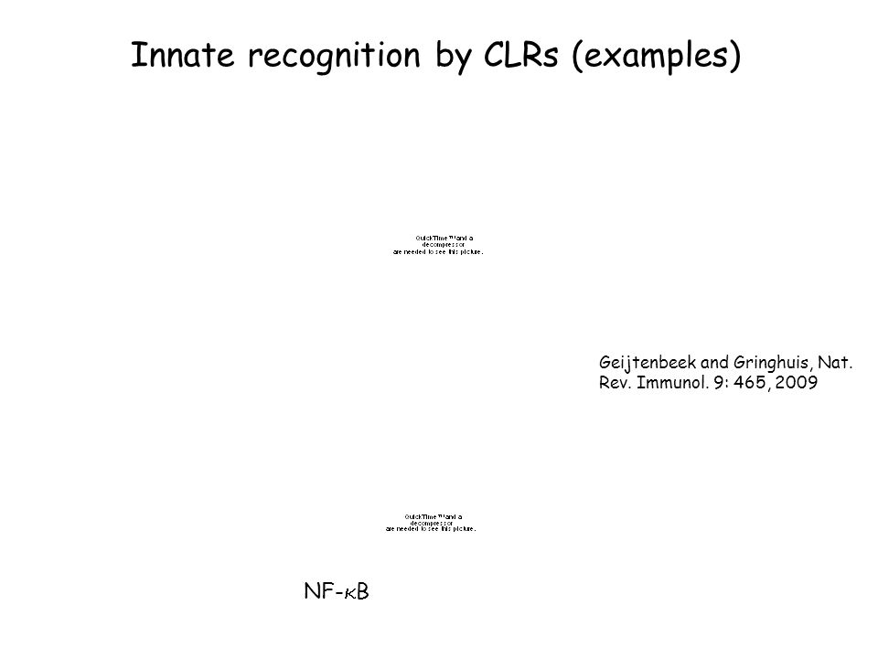 Innate recognition by CLRs (examples) Geijtenbeek and Gringhuis, Nat. Rev. Immunol. 9: 465, 2009 NF-  B