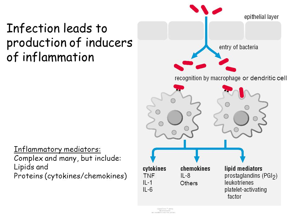 Leukocyte recruitment to sites of inflammation: neutrophils are good at killing microbes See Abbas and Lichtman Fig.