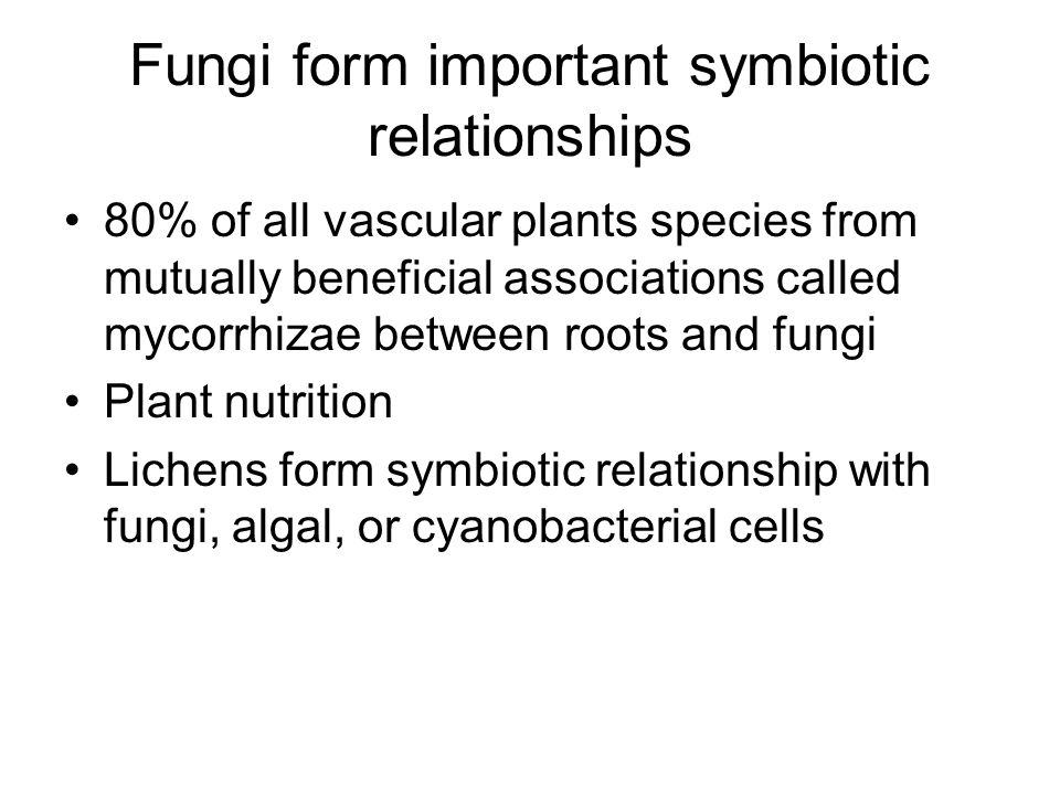 Fungi form important symbiotic relationships 80% of all vascular plants species from mutually beneficial associations called mycorrhizae between roots