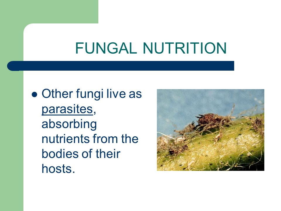 FUNGAL NUTRITION Many fungi are decomposers, which means they feed by absorbing nutrients from decaying matter in the soil.