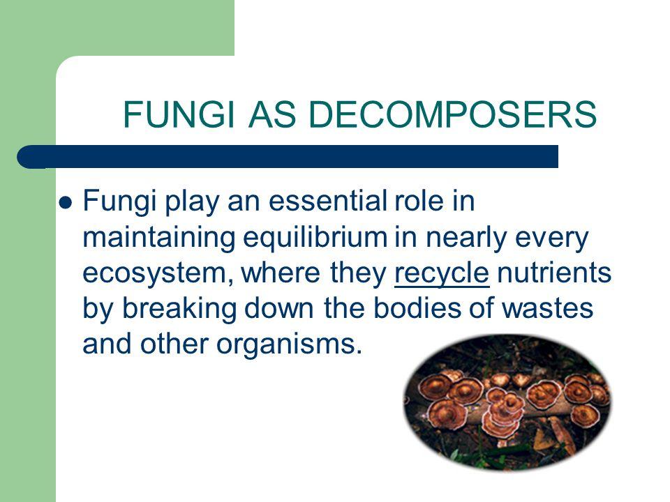 DEUTEROMYCOTA Imperfect fungi Ex. Penicillium Have never been observed undergoing sexual reproduction