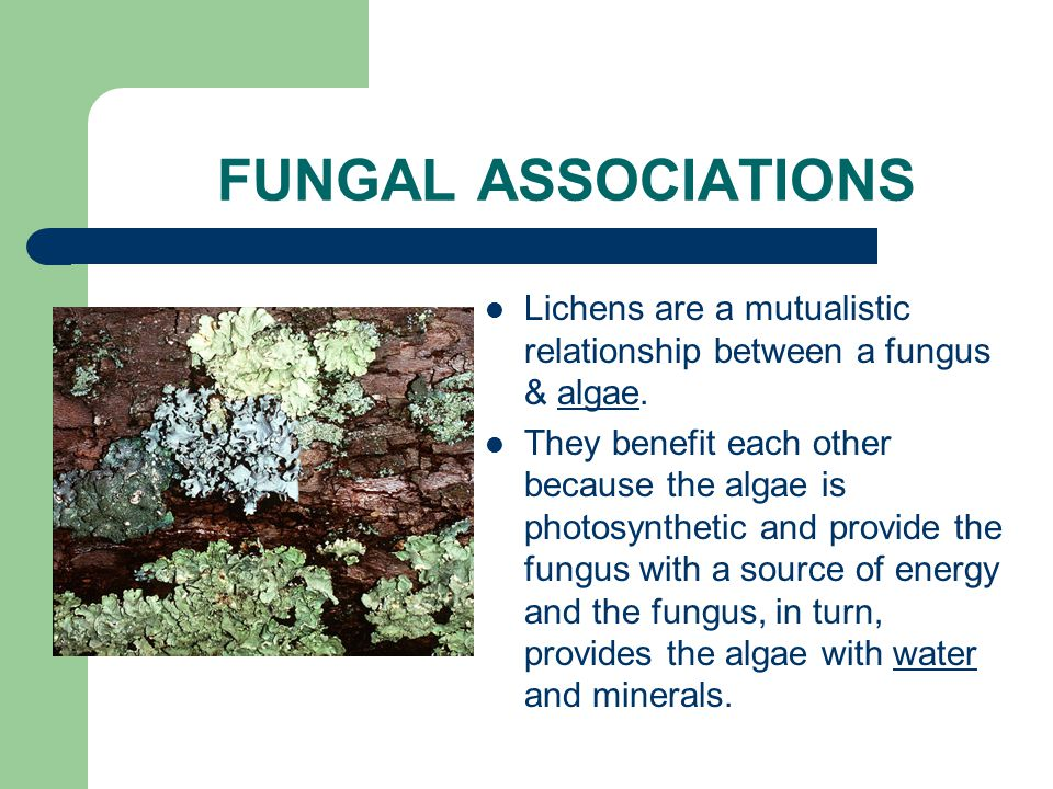 FUNGAL ASSOCIATIONS Fungi form symbiotic relationships with other organisms. A symbiotic relationship is one in which organisms live closely together
