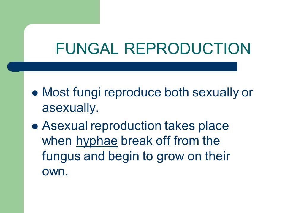 DIVISIONS of KINGDOM FUNGI Kingdom Fungi is divided into 4 major divisions (phyla).