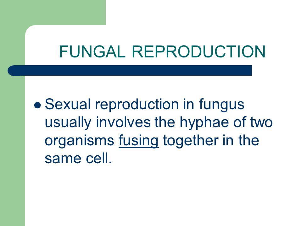 ASCOMYCOTA Sac fungi Ex.