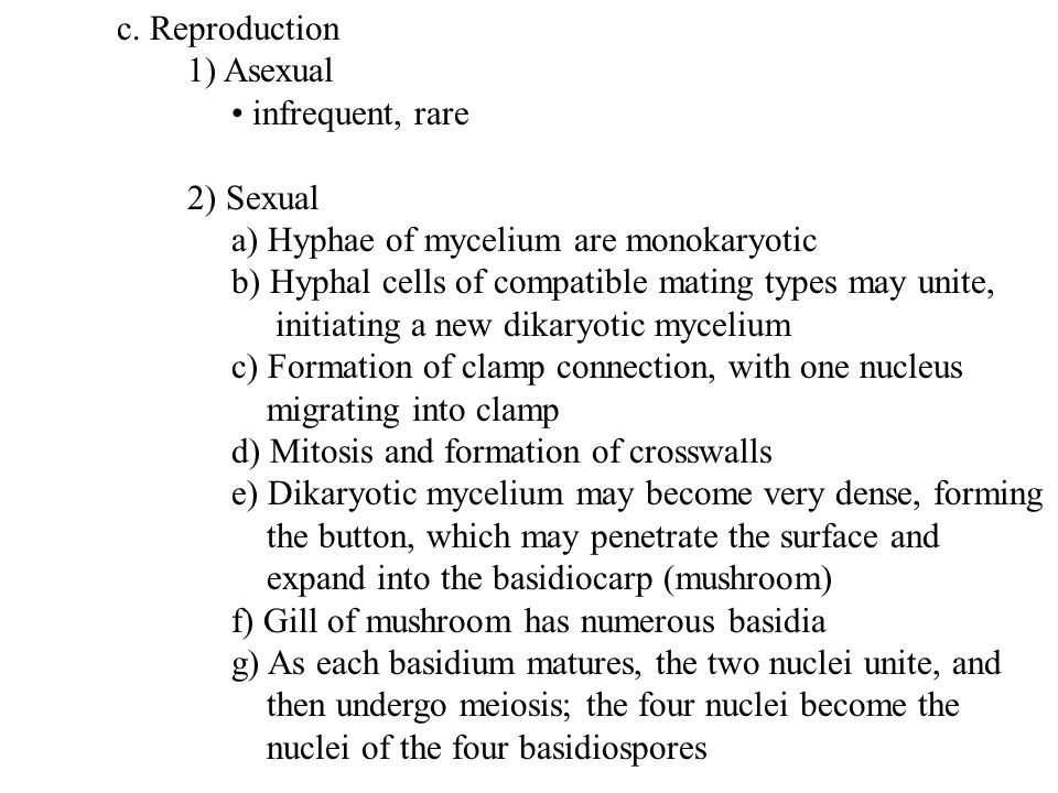 c. Reproduction 1) Asexual infrequent, rare 2) Sexual a) Hyphae of mycelium are monokaryotic b) Hyphal cells of compatible mating types may unite, ini
