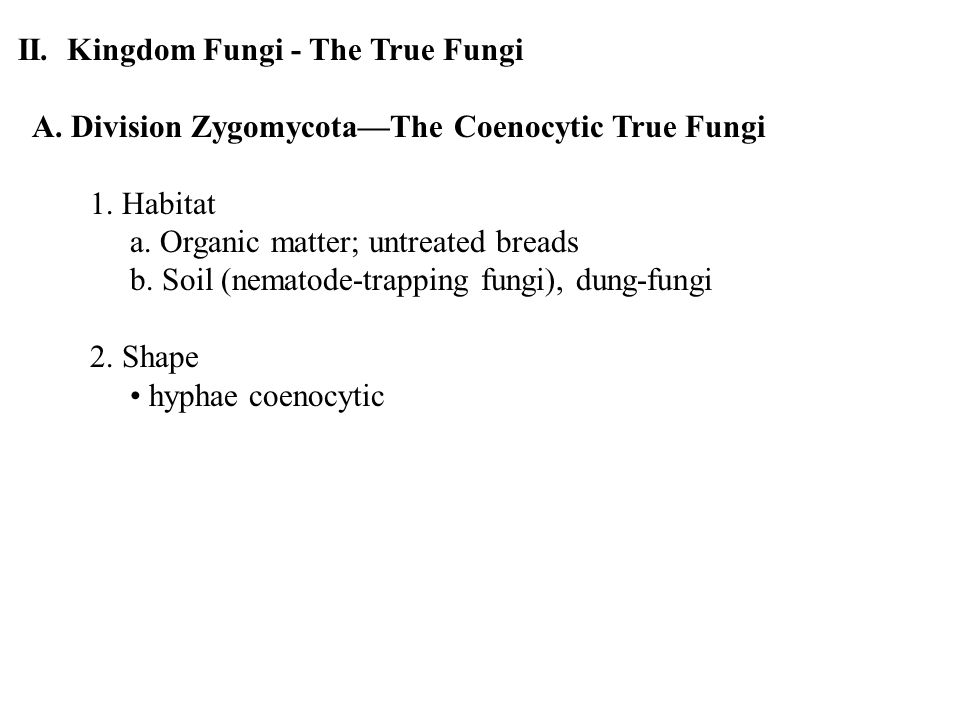 II. Kingdom Fungi - The True Fungi A. Division Zygomycota—The Coenocytic True Fungi 1.