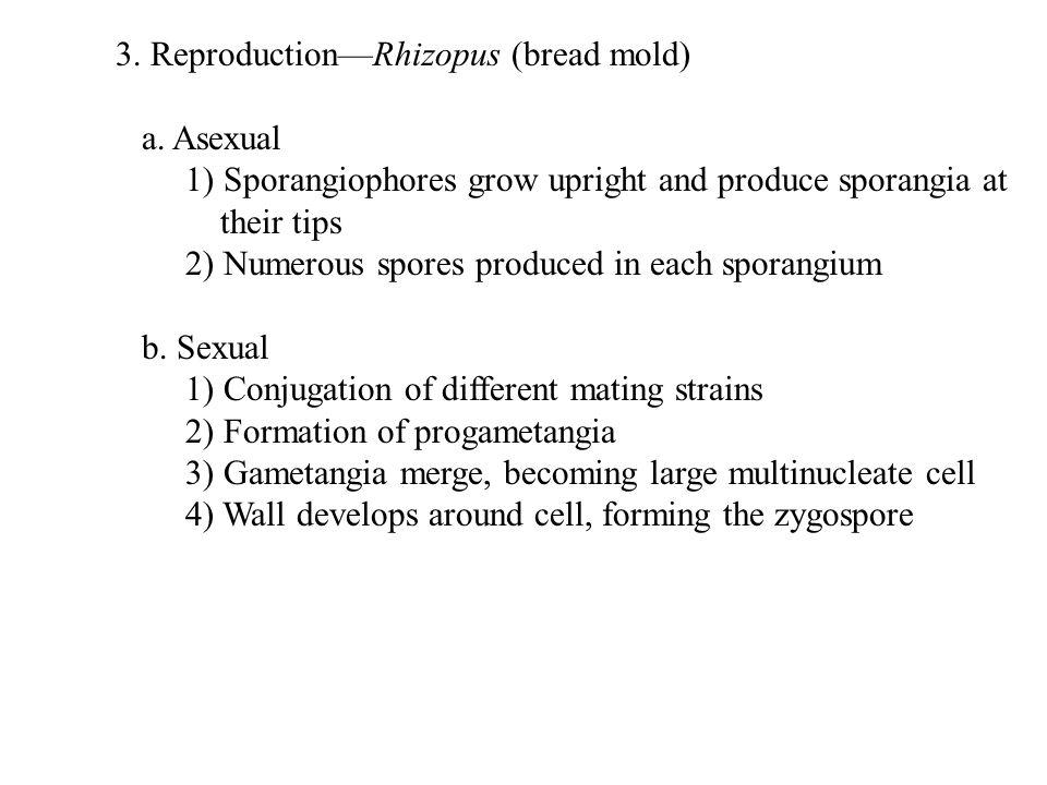 B.Reproduction 1.