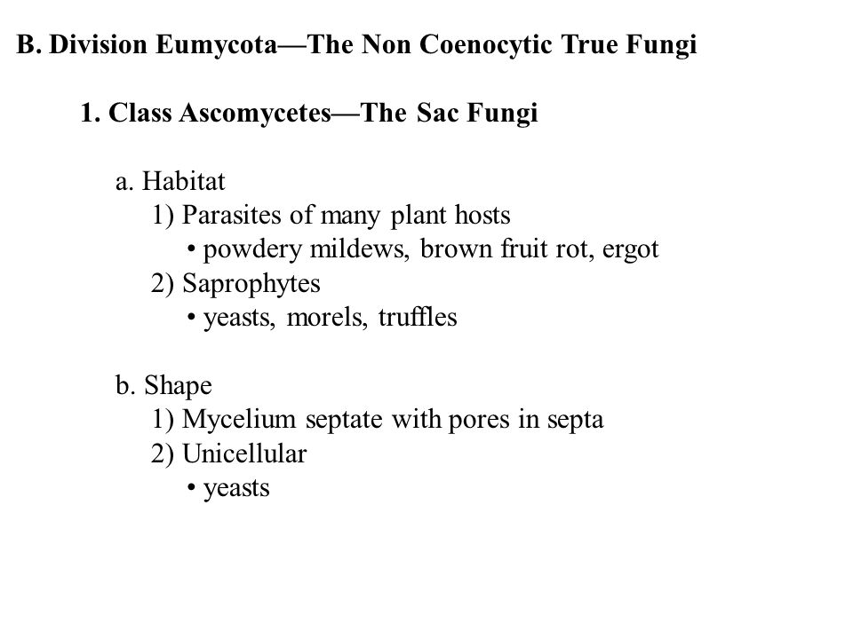 B. Division Eumycota—The Non Coenocytic True Fungi 1.