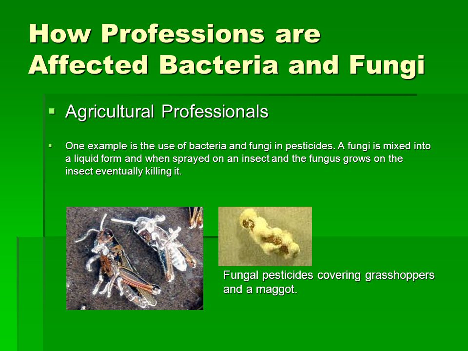 How Professions are Affected Bacteria and Fungi  Agricultural Professionals  One example is the use of bacteria and fungi in pesticides. A fungi is