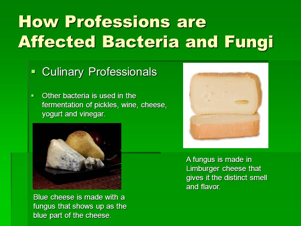 How Professions are Affected Bacteria and Fungi  Culinary Professionals  Other bacteria is used in the fermentation of pickles, wine, cheese, yogurt