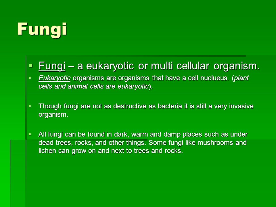 Fungi  Fungi – a eukaryotic or multi cellular organism.  Eukaryotic organisms are organisms that have a cell nuclueus. (plant cells and animal cells