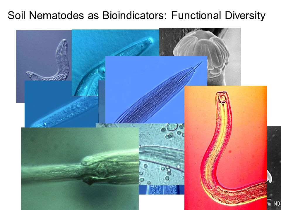 Soil Nematodes as Bioindicators: Functional Diversity