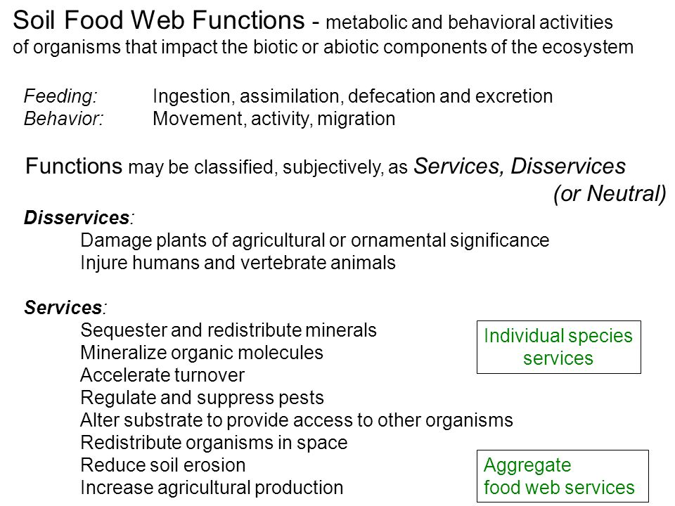 Soil Food Web Functions - metabolic and behavioral activities of organisms that impact the biotic or abiotic components of the ecosystem Feeding: Ingestion, assimilation, defecation and excretion Behavior: Movement, activity, migration Functions may be classified, subjectively, as Services, Disservices (or Neutral) Disservices: Damage plants of agricultural or ornamental significance Injure humans and vertebrate animals Services: Sequester and redistribute minerals Mineralize organic molecules Accelerate turnover Regulate and suppress pests Alter substrate to provide access to other organisms Redistribute organisms in space Reduce soil erosion Increase agricultural production Individual species services Aggregate food web services