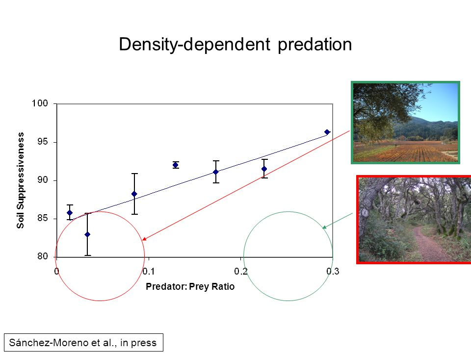 Density-dependent predation Predator: Prey Ratio Sánchez-Moreno et al., in press