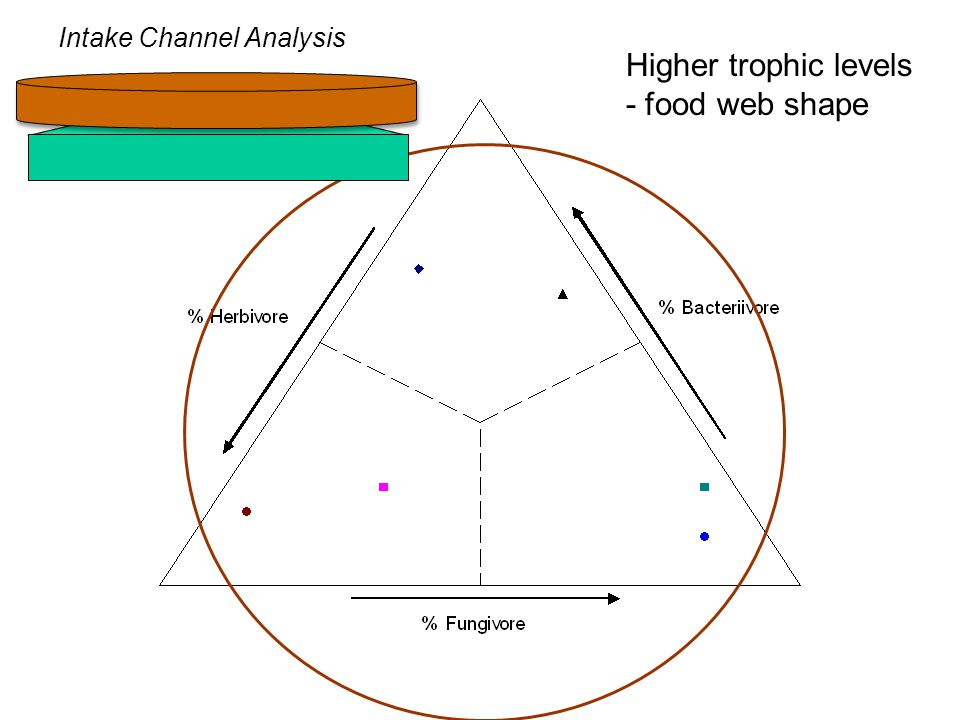 Higher trophic levels - food web shape Intake Channel Analysis
