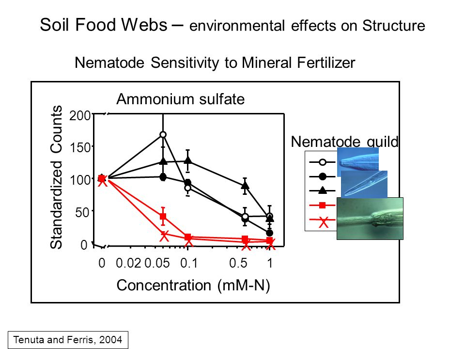 Nematode Sensitivity to Mineral Fertilizer Tenuta and Ferris, 2004 Soil Food Webs – environmental effects on Structure