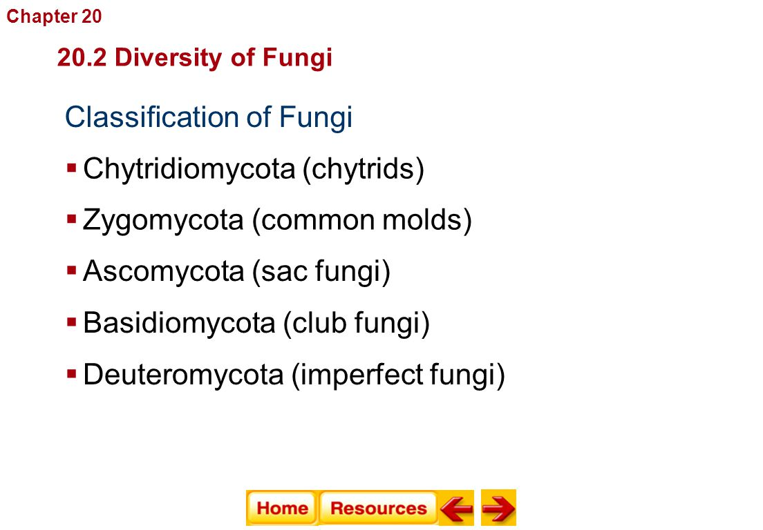Classification of Fungi  Chytridiomycota (chytrids) 20.2 Diversity of Fungi Fungi  Zygomycota (common molds)  Ascomycota (sac fungi)  Basidiomycot