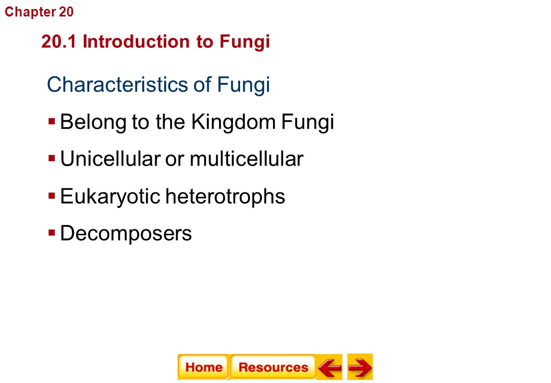 Characteristics of Fungi  Belong to the Kingdom Fungi 20.1 Introduction to Fungi Fungi  Unicellular or multicellular Chapter 20  Eukaryotic heterot