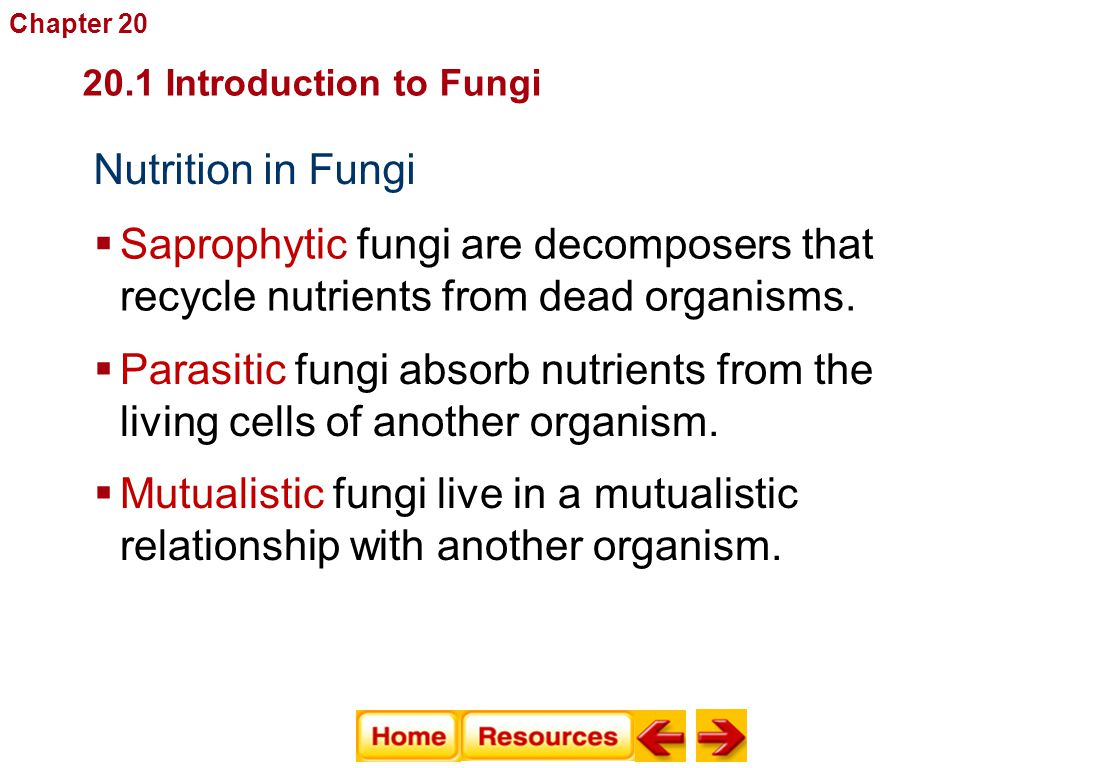 Nutrition in Fungi  Saprophytic fungi are decomposers that recycle nutrients from dead organisms. Fungi  Parasitic fungi absorb nutrients from the l