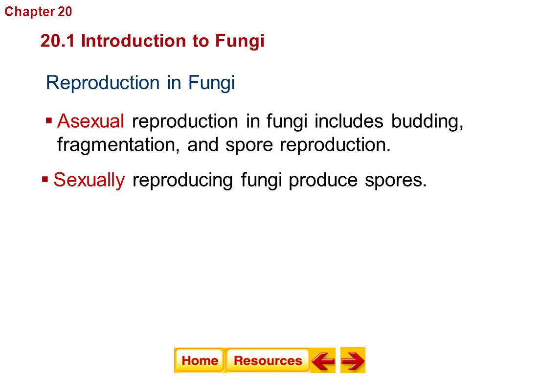 Reproduction in Fungi Fungi  Asexual reproduction in fungi includes budding, fragmentation, and spore reproduction.  Sexually reproducing fungi prod