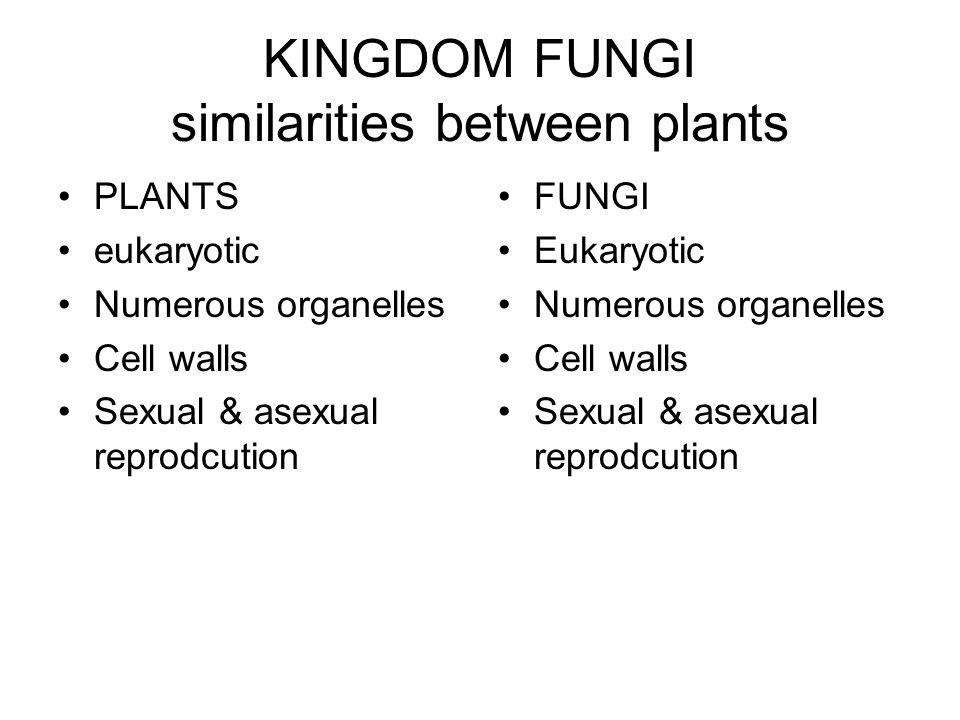 KINGDOM FUNGI similarities between plants PLANTS eukaryotic Numerous organelles Cell walls Sexual & asexual reprodcution FUNGI Eukaryotic Numerous organelles Cell walls Sexual & asexual reprodcution