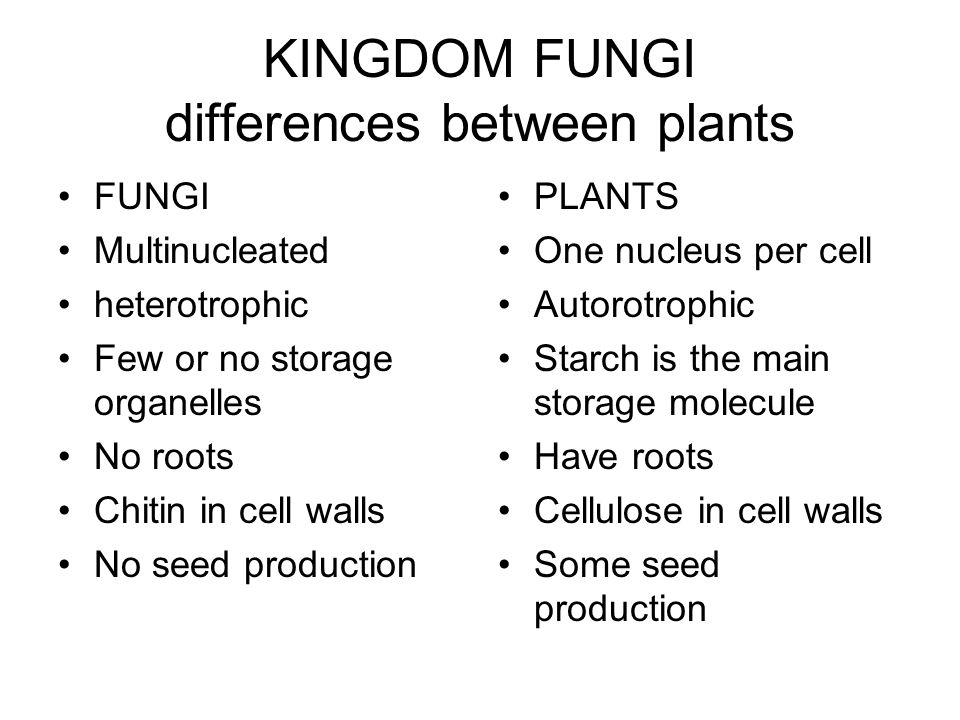 KINGDOM FUNGI differences between plants FUNGI Multinucleated heterotrophic Few or no storage organelles No roots Chitin in cell walls No seed production PLANTS One nucleus per cell Autorotrophic Starch is the main storage molecule Have roots Cellulose in cell walls Some seed production