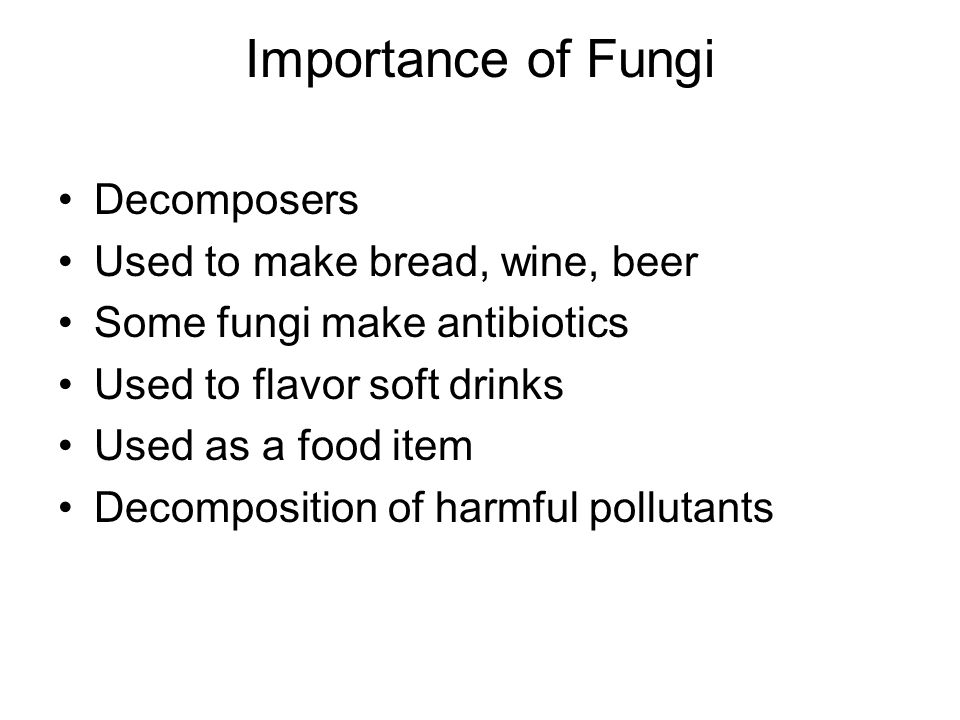 Importance of Fungi Decomposers Used to make bread, wine, beer Some fungi make antibiotics Used to flavor soft drinks Used as a food item Decomposition of harmful pollutants