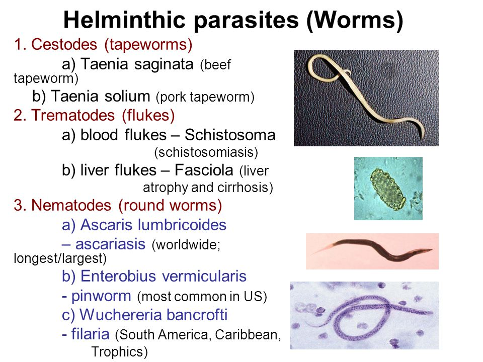 Helminthic parasites (Worms) 1.